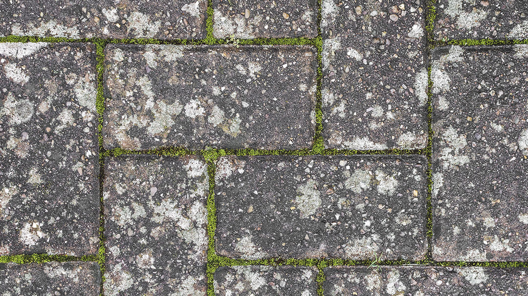 Kill Moss And Mould On Pavers Concrete And Cobblestones