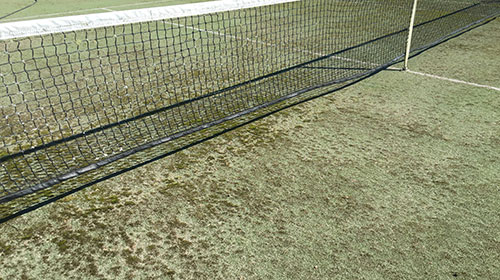 Kill Moss On Tennis Court And Spray For Mould And Lichen